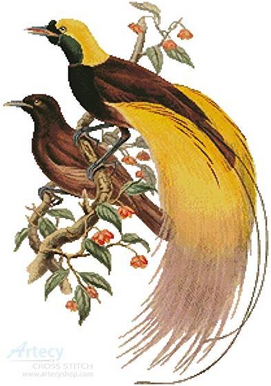 cross stitch pattern Greater Bird of Paradise