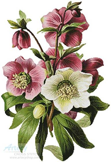 cross stitch pattern Hellebore