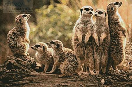 cross stitch pattern Meerkat Family