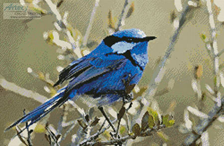 cross stitch pattern Male Splendid Fairy Wren 3
