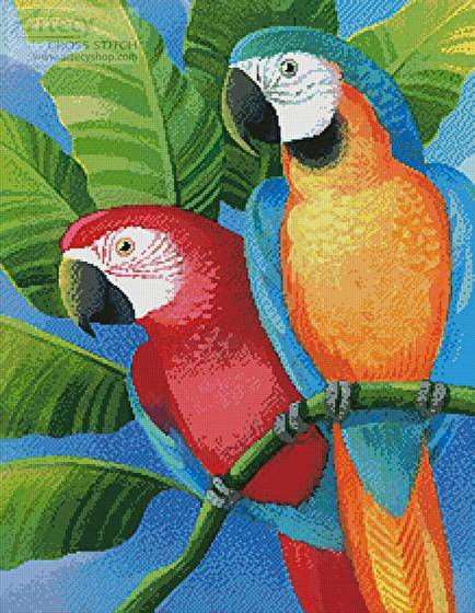 cross stitch pattern Parrots