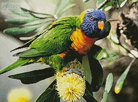 cross stitch pattern Rainbow Lorikeet