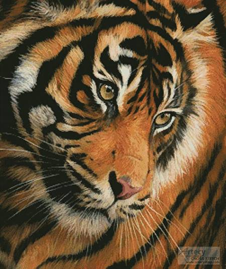 cross stitch pattern Tiger Face Portrait