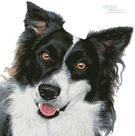 cross stitch pattern Border Collie Painting