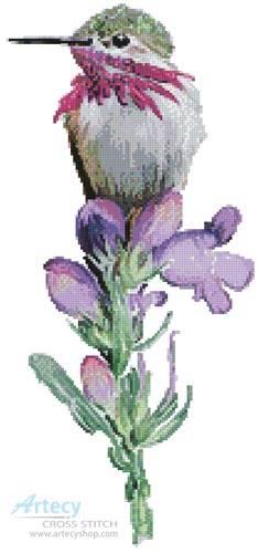 cross stitch pattern Calliope Hummingbird