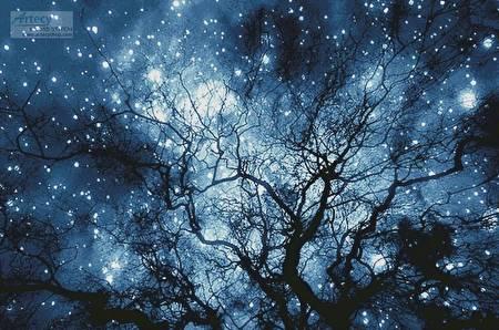 cross stitch pattern Tree Silhouette against Starry Night(LG)