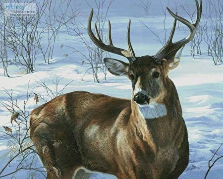 cross stitch pattern Whitetail Buck (Large)