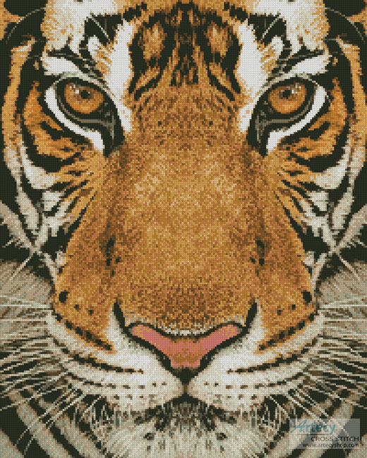 cross stitch pattern Bengal Tiger (Colour)