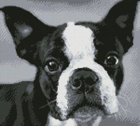 cross stitch pattern Boston Terrier Close Up