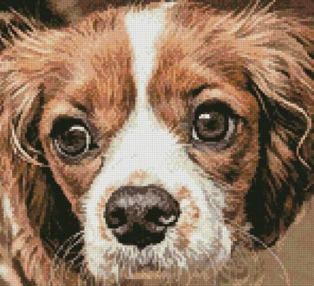 cross stitch pattern Cavalier King Charles