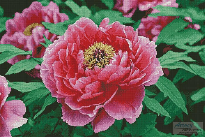 cross stitch pattern Peony