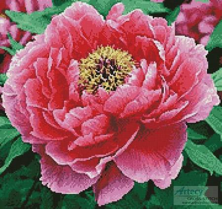 cross stitch pattern Peony (Crop)