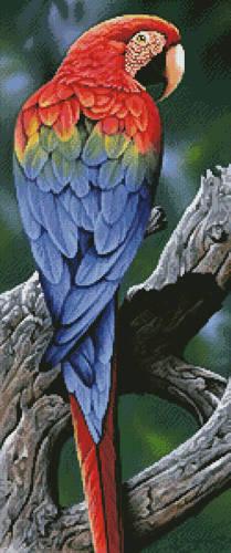 cross stitch pattern Scarlet Macaw Painting