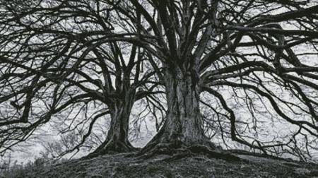 cross stitch pattern Branching Out - Black and White