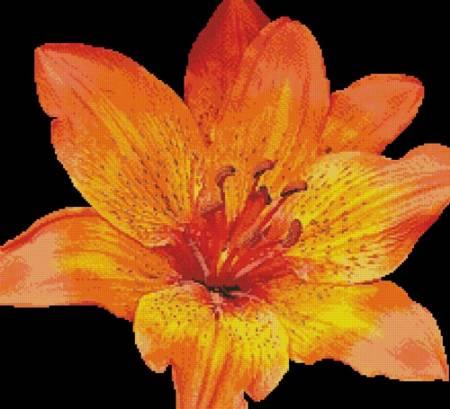 cross stitch pattern Fire Lily Photo