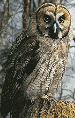 cross stitch pattern Owl Photo (Crop)