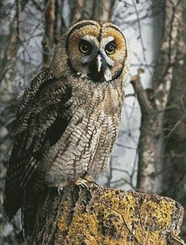 cross stitch pattern Owl Photo