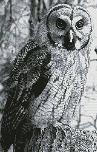 cross stitch pattern Owl Photo Black and White (Crop)