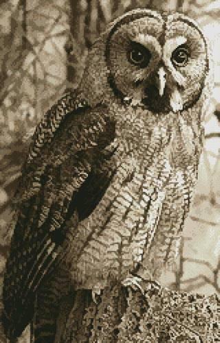 cross stitch pattern Owl Photo Sepia (Crop)