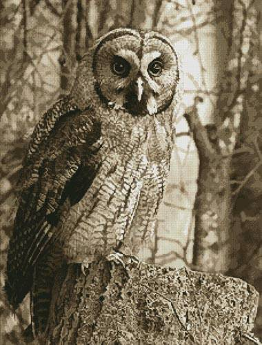 cross stitch pattern Owl Photo Sepia