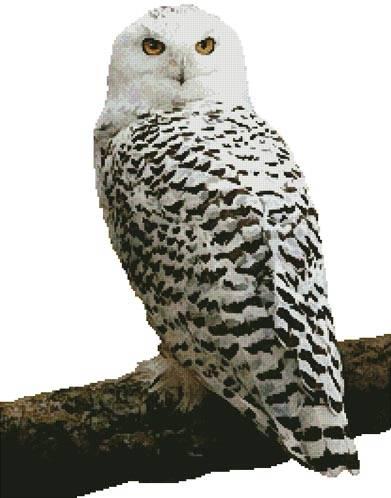 cross stitch pattern Snowy Owl (No Background)