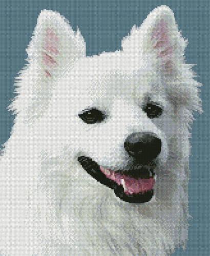 cross stitch pattern American Eskimo Dog 3