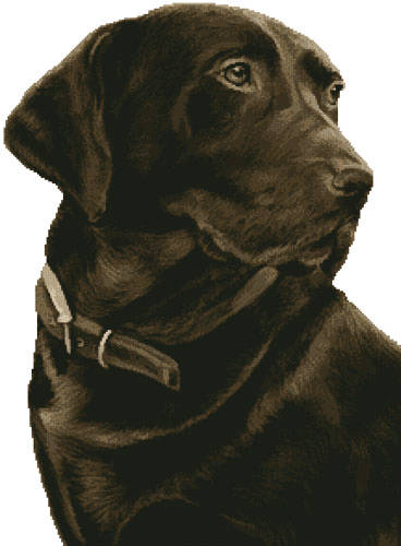 cross stitch pattern Chocolate Labrador (No Background)