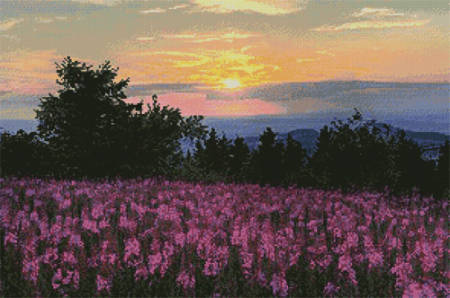 cross stitch pattern Fireweed Field