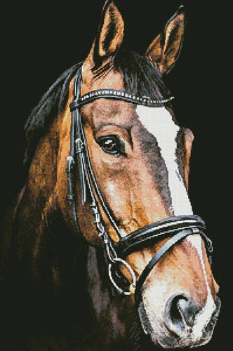cross stitch pattern Horse Close Up 2