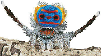 cross stitch pattern Mini Peacock Spider