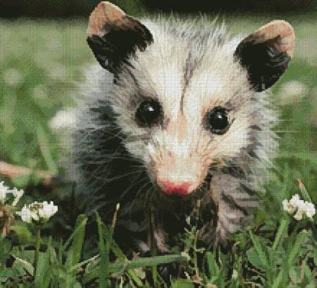 cross stitch pattern Opossum Joey (Crop)