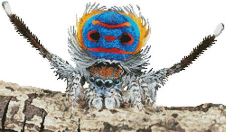 cross stitch pattern Peacock Spider