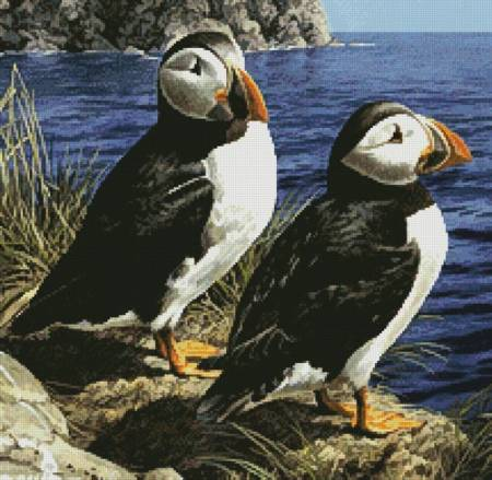 cross stitch pattern Puffin Couple (Crop)