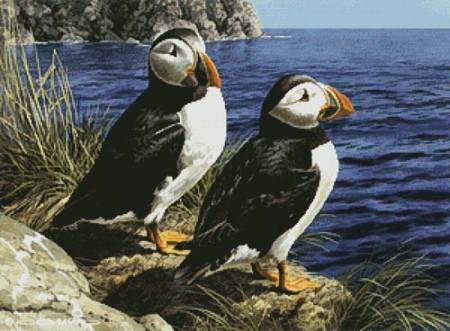 cross stitch pattern Puffin Couple