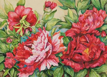 cross stitch pattern Peonies in Shades of Red