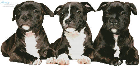 cross stitch pattern Staffordshire Bull Terrier Puppies