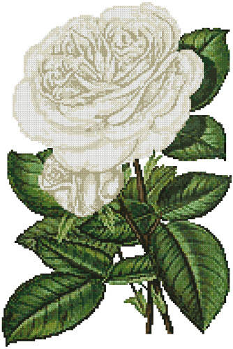 cross stitch pattern White Roses Print