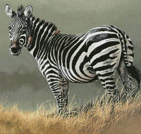 cross stitch pattern Zebra Painting