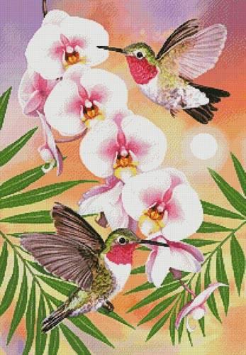 cross stitch pattern Annas Hummingbirds with Phalaenopsis