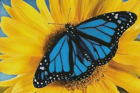 cross stitch pattern Blue Monarch Sunflower