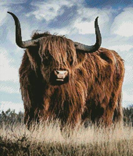 cross stitch pattern Highland Bull (Crop)