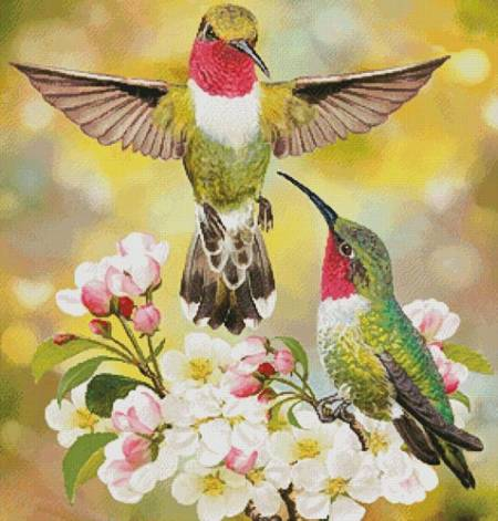 cross stitch pattern Hummingbird Challenger