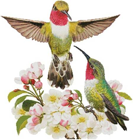 cross stitch pattern Hummingbird Challenger (No Background)