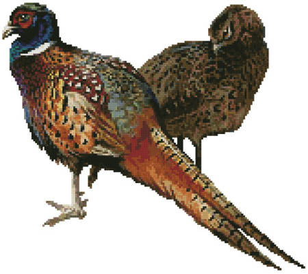 cross stitch pattern Pheasants (No Background)