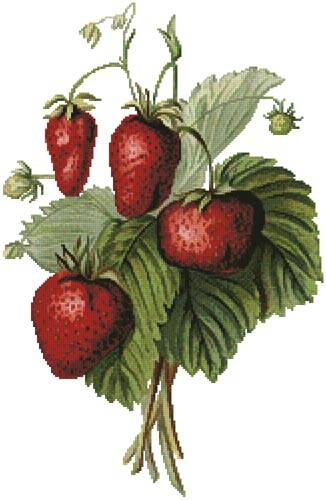 cross stitch pattern Strawberries Painting