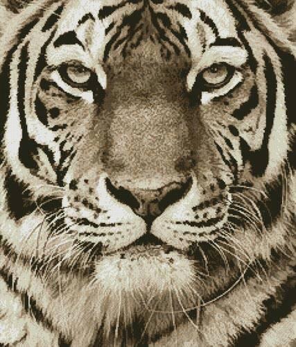 cross stitch pattern Tiger Portrait (Sepia)