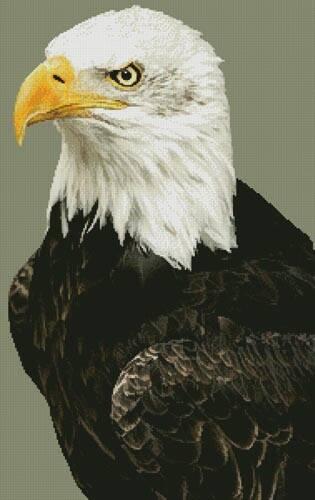 cross stitch pattern Bald Eagle Portrait