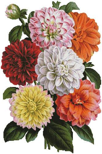 cross stitch pattern Dahlias Print
