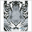 cross stitch pattern Mini Bengal Tiger Black and White