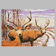 cross stitch pattern Mule Deer in a Cornfield